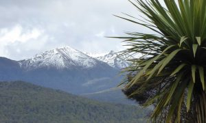 cabbagetree_snow_laketeanau